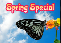Spring Special